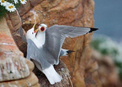 Птички.,пташки.,пичужки (40 фото)
