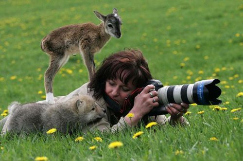 Эти забавные животные (40 фото)
