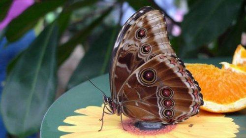 Выставка бабочек (17фото)