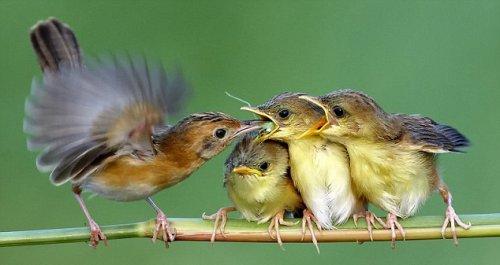 Мама,покорми нас! (12 фото)