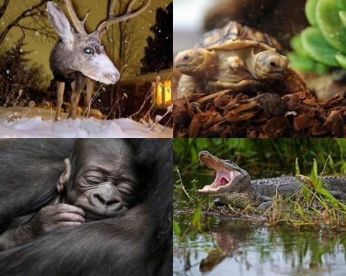 В мире животных (19 фото)