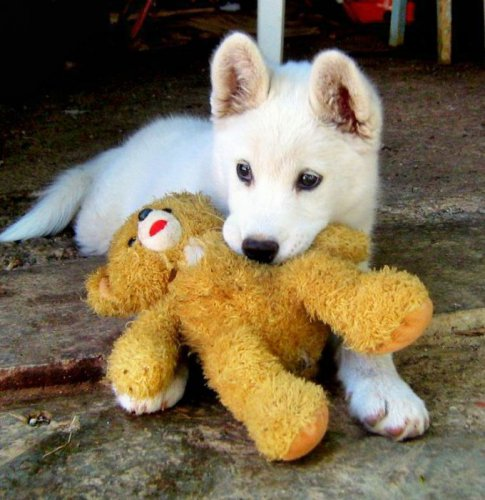 Любителям собак (35 фото)