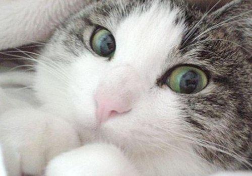 Юмор: Обязаности кота по дому