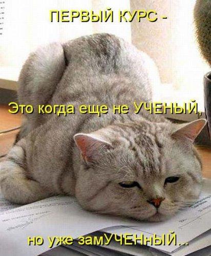 Весёлая котоматрица (40 фото)