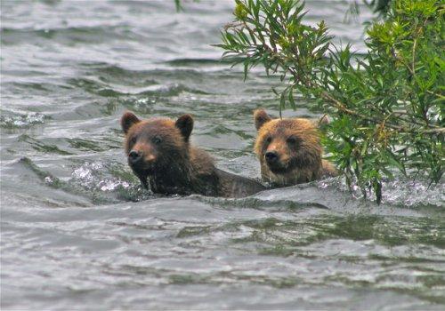 Медведи Камчатки (15 фото)