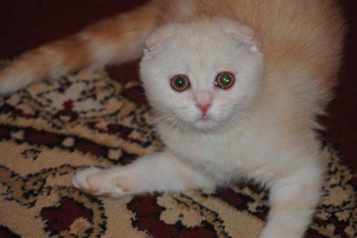 Специально для любителей кошек (35 фото)