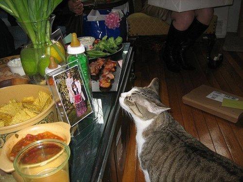 Коты и мясо (28 фото)