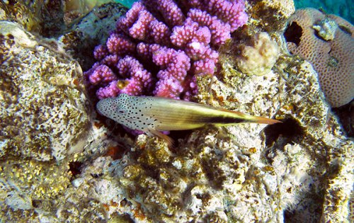 Аквариумные рыбки (26 фото)