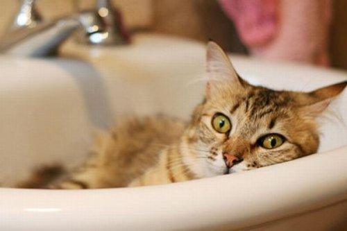 Кошко-приколы