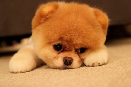 Самая популярная собака на Facebook (48 фото)
