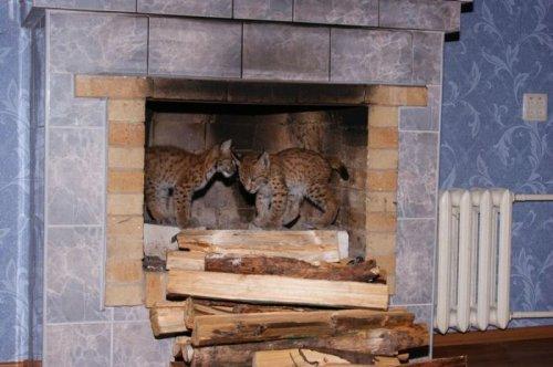 Домашний зоопарк (67 фото)