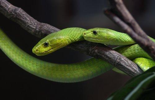 Рептилии (18 фото)