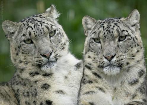 Как мы похожи друг на друга:) (33 фото)