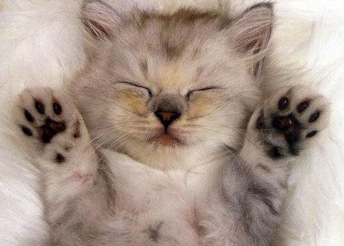 10 распространённых мифов о кошках.