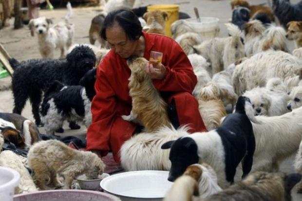 """Китайский любитель собак (3 фото) """" Клопик.КоМ - сайт любителей животных"""
