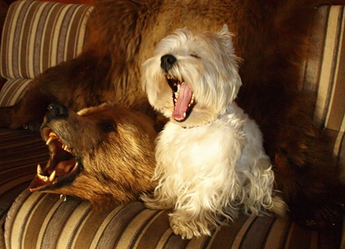 Смешные зверята (40 фото)
