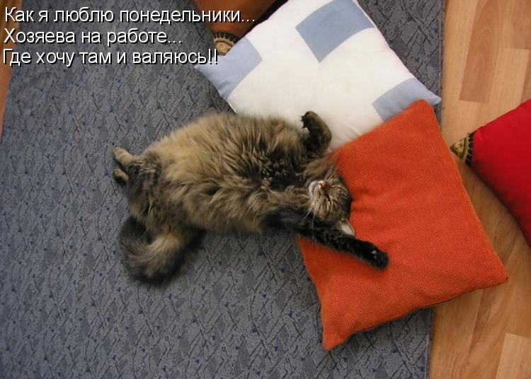смешные фото про понедельник на работу девичника фотостудии