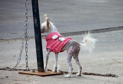 Забавные животные (36 фото)