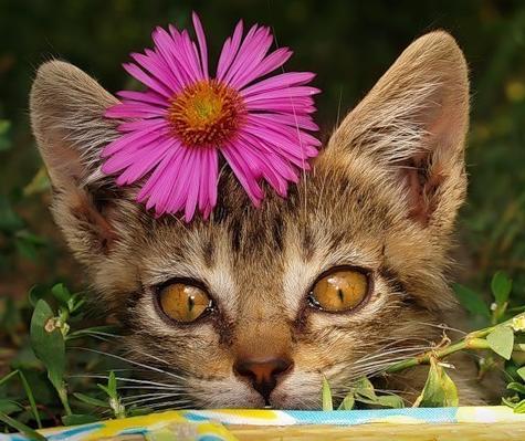 Весна... цветы:) (24 фото)
