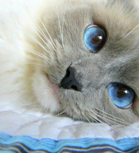 Чарующие кошачьи глазки (26 фото)