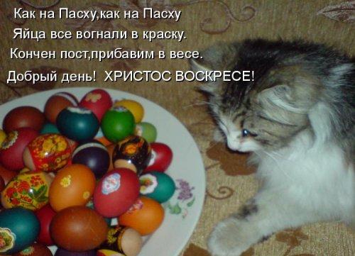 Пасхальная котоматрица (25 фото)