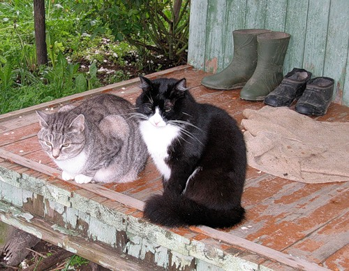 Отдых на даче (30 фото)