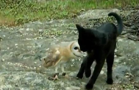 Кошка и сова - необычная парочка