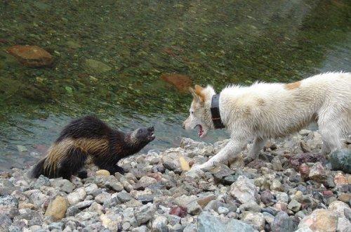 Водяные кошки (30 фото)