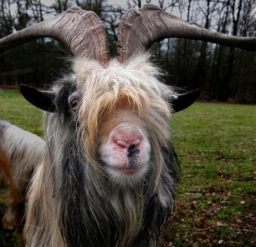 Дикие животные фотографа Эдгара Тиссена (20 фото)
