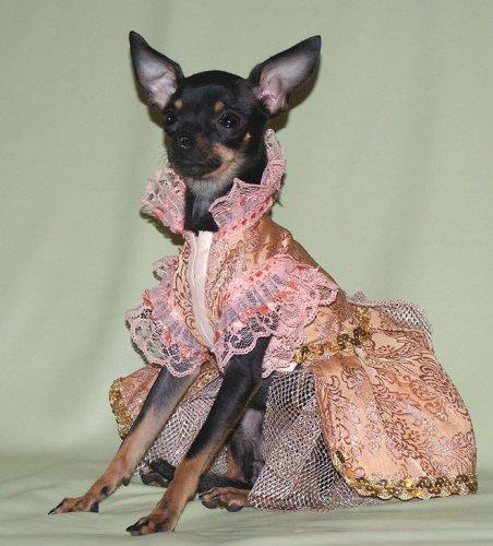 Гламурные наряды для собачек (18 фото)