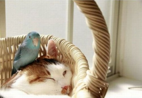 Возможна ли такая дружба? (4 фото)