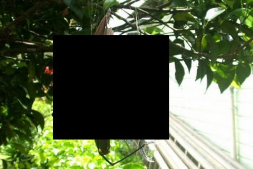 Жалко птичку (5 фото)