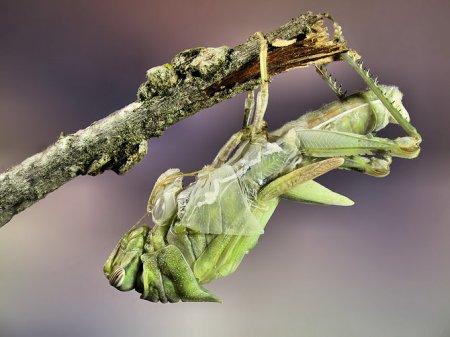 Животный мир от фотографа Jim Hoffman (95 фото)