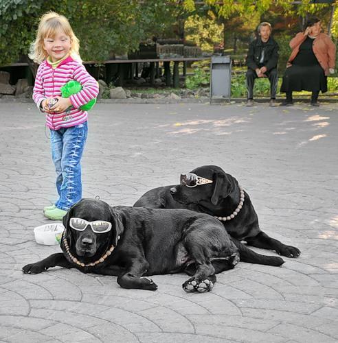 Смешные животные (40 фото)