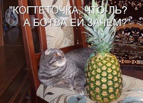 Кото-лайф (40 фото)