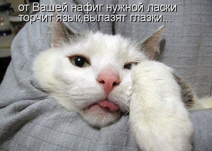 Самая прикольная и смешная картинка про животных с надписью