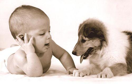 Об аллергии на домашних животных