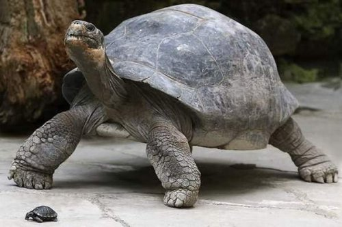 Животные, которым оставили огромное наследство (10 фото)