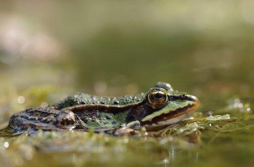 Лягушки (12 фото)