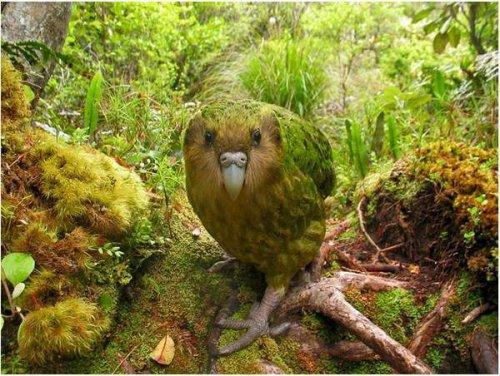 Самые редкие птицы мира (13 фото)