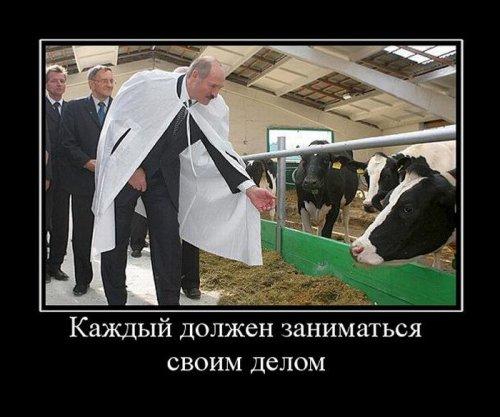 Демотиваторы про животных (15 фото)