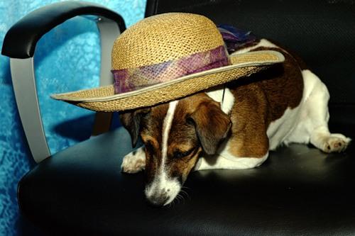 Всё дело в шляпе (17 фото)
