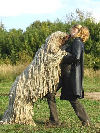 О породе:Венгерская овчарка.Комондор. (12 фото)