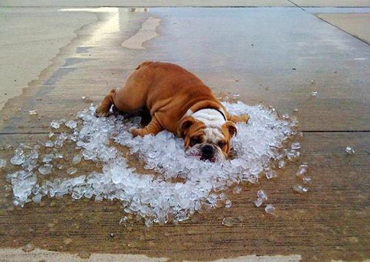 Уход за домашними питомцами в жару