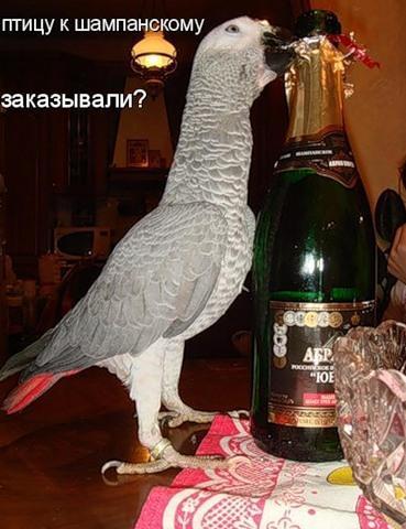 Птице-лайф (32 фото)