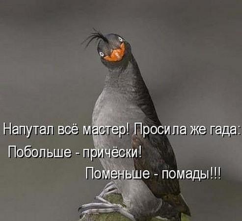 Анекдоты Про Птиц