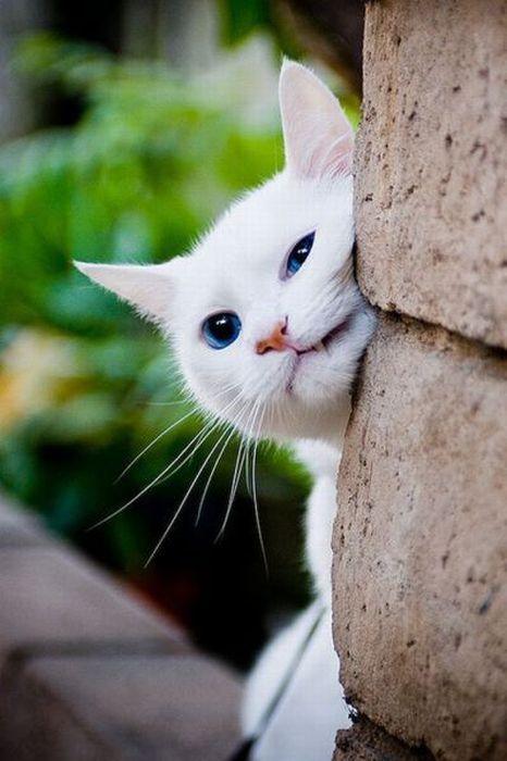 том, что почему кот пытается удариться головой о человека любом
