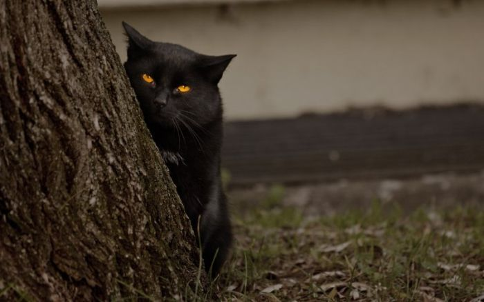 Кошки → кошки среди деревьев 15 фото