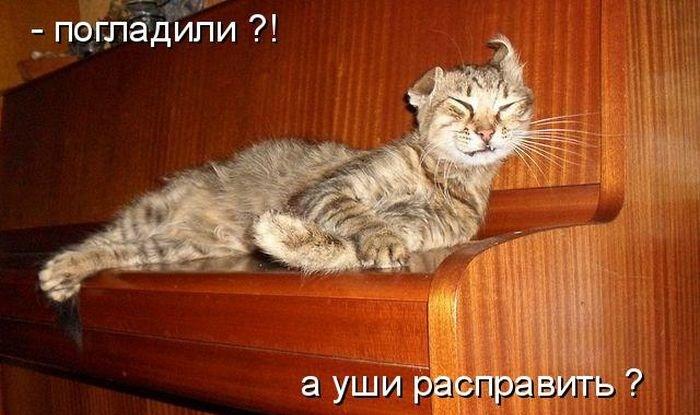 http://klopik.com/uploads/posts/2011-07/1311863786_1310724709_kotomatrix_39.jpg