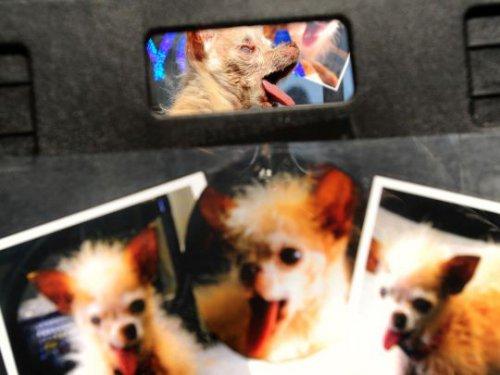 Конкурс на звание самой уродливой в мире собаки (20 фото)